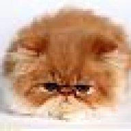 kittycat_nilo