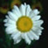 sarahflower