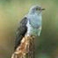 Gżegżółka