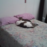 catlady60
